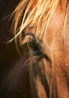 The soul of a horse connects with the soul of a human...our mirror
