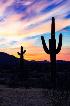 Is Moving to Phoenix Right for You? A 2019 Guide Read our guide to living in Phoenix, Arizona. The Wave Arizona, Arizona City, Living In Arizona, Arizona Travel, Arizona Trip, Pheonix Arizona, Grand Canyon Vacation, Stuff To Do, Things To Do