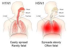 H7N9: Highly Pathogenic And The WHO Suspect Human To Human Transmission