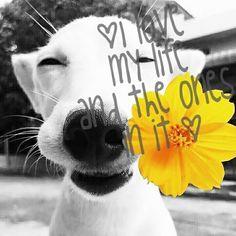 Bom dia  3 F's Força fé  e foco  @uohbrecho 👉Siga www.fb.com/uohbrecho  🕞 Agende sua visita pelo  📞Whatsapp/telegram + 55 31 9.8729-0249  #dog  #goodmorning  #fun #flower #petstagram  #good #brecho #uohbrecho  #insta #sustentabilidade #smile #relax #happy #blogger #blog #bh #life  #inspiracao #like #2hand #instagood #ootd #igers #fe #deusnocomando #mixb #economiacriativa  #belohorizonte #Minasgerais