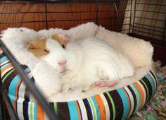 Sleepy piggy