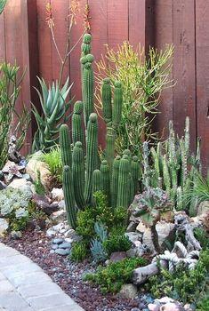 captus y suculentas para el jardin me encanta esta combinacion