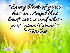 Every blade of grass has an angel that bends over it and whispers, 'Grow! Grow!. - Talmud  #angels #everywhere #angeliclove #spiritguides #inspirational