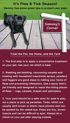 Tips for Flea & Tick Season