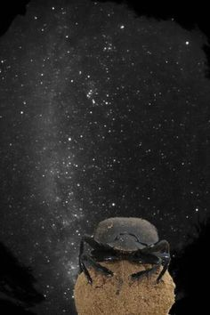 The Dung Beetle, an insect with a tiny brain and minimal computing power, is the first animal proven to use the Milky Way for orientation, according to scientists from South Africa and Sweden. Cosmos, Milky Way Stars, Light Pollution, To Infinity And Beyond, Science And Nature, Natural World, Science And Technology, Astronomy, Mother Nature