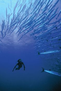 Buceo by Rossarrio, via Flickr