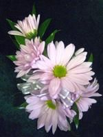 Google Image Result for http://ladyjanesflowers.net/images/catalog/Flowers/2488/corsage%2520015_Small.jpg