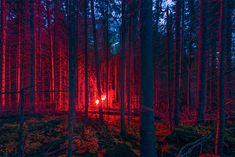 Gorgeous And Intriguing Series Of Photographs By Øystein Sture Aspelund Capturing Temporary Installations Of Smoke, Light & Fire, Set In Unspoilt Nordic Landscapes Photography Series, Fine Art Photography, Street Photography, Artistic Photography, New Gods, Behance, Grid Design, Red Aesthetic, Land Art