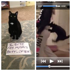 "kitty shaming | ... how long it will take for cats to come up with ""human shaming"