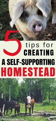5 Tips for Creating a Self-Supporting Homestead Make your hoemstead pay for it self! Learn how to create a self supporting homestead that pays for it's own upkeep and expenses. It is one of the first steps in becoming fully self sustainable!