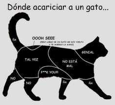 Dónde acariciar a un gato…. #humor #risa #graciosas #chistosas #divertidas