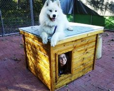 Sosi - Minnesota:  several years of being tried and tested, this dog house has been proven to be the most comfortable and the safest home you can build for your beloved dog.