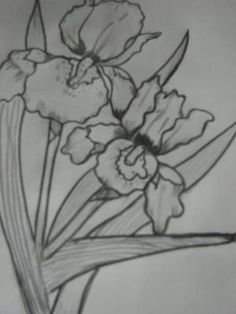 IRIS: This is one of my first flower drawings, I got a little lazy when it came to the leaves, but I am just learning.  ***Note from Kerry: I remember doing