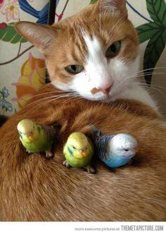 Kitty makes a good nest…
