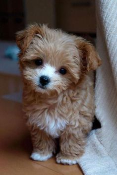 Super Cute Puppies, Cute Baby Dogs, Cute Little Puppies, Small Puppies, Cute Dogs And Puppies, Cute Little Animals, Cute Funny Animals, Pet Dogs, Puppies Puppies