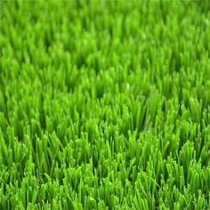grass soccer in Australia – Top-Joy International Trading (Shanghai) Co. Artificial Grass Garden, Artificial Turf, Types Of Carpet, How To Dry Basil, Lawn, Herbs, Color 2, Landscape, Creativity