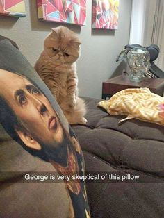 Brilliant -> Funny Cat And Dog Pics With Captions ;-)