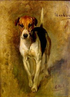 Matchless, Gustav Muss-Arnolt, be nice on a color printer and an old frame Art And Illustration, The Fox And The Hound, Animal Paintings, Animal Painter, Hound Dog, Sports Art, Dog Portraits, Beautiful Paintings, Dog Art