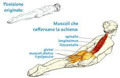 L'estensione della schiena è un esercizio molto comune. Gli specialisti si affidano a questo esercizio non solo per il training sportivo ma anche in medicina.Se effettuato con regolarità vi aiuterà ad eliminare la tendenza a curvare la schiena con conseguente disagio della colonna vertebrale e vi donerà una postura perfetta. Coloro che lavorano in ufficio …