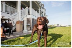 Nellie had a great time at Yappy Hour! Wednesdays 5-7pm at the Madison Beach Hotel #dogs