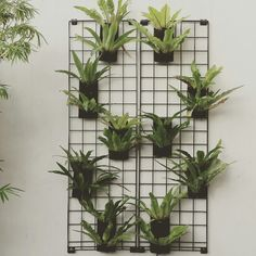 Our diy vertical garden