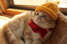 cosplay,cat,munchikin,Snow White,Dwarf