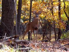 Don't Give Up When You Bump a Buck From His Core Area - See more at: http://www.deeranddeerhunting.com/articles/deer-behavior/dont-give-up-when-you-bump-a-buck-from-his-core-area#sthash.u8Ygl1rd.dpuf