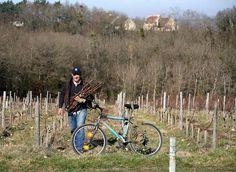 Bikes & Grape Vines united!
