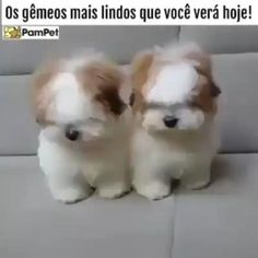 Baby Animals Super Cute, Cute Baby Dogs, Cute Funny Dogs, Cute Dogs And Puppies, Cute Funny Animals, Cute Puppy Pictures, Cute Puppy Videos, Funny Animal Videos, Cutest Small Dog Breeds