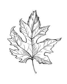 Leaf Line Drawing Instant Download Leaf Art Fall by SketchOutlet