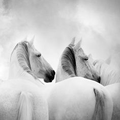 Found it at Wayfair - Horses photographic Print on Wrapped Canvas