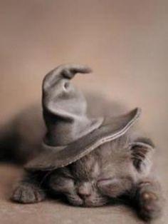 A sleeping grey kitten wearing a wizard hat.