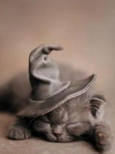 A sleeping grey kitten wearing a wizard hat.