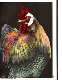 Rooster by Lori Clinton-Holmquist