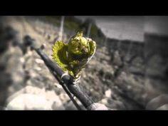 PERNAND VERGELESSES Grandes vinos de Bourgogne.