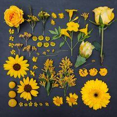 Color-Coded Photographs Of Floral Arrangements.  Color coding forever!
