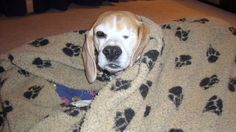 Petition · Abolish the breeding for & use of Beagles for animal experimentation in the UK · Change.org