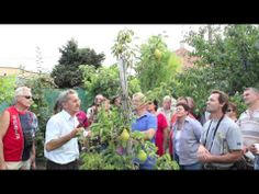 Ivan Hričovský: Rez hrušky v auguste Fruit Trees, Youtube, Outdoor, Gardening, Outdoors, Lawn And Garden, Outdoor Games, The Great Outdoors, Youtubers