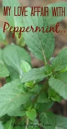 My Love affair with peppermint! #peppermint