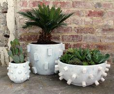 cactus, palmier et succulentes dans des pots extraordinaires