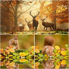 The animals who enjoy a magical autumn http://veu.sk/index.php/aktuality/1637-zvierata-ktore-si-uzivaju-carovnu-jesen.html #animals #enjoy #magical #autumn