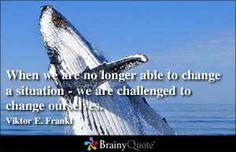 When we are no longer able to change a situation - we are challenged to change ourselves. - Viktor E. Frankl at BrainyQuote Mobile