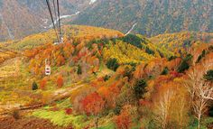秋旅行は早め予約でお得に!今から計画したい秋のおすすめスポット【東海】