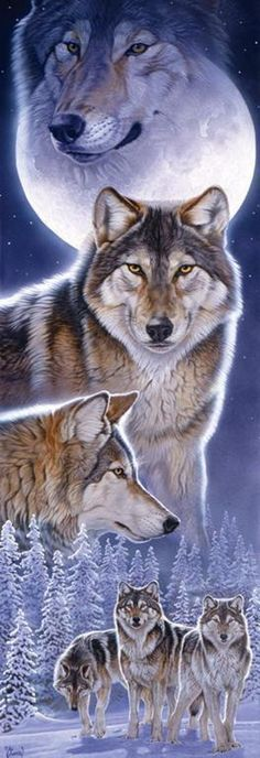 25 Ideas Wolf Spirit Animal Art Full Moon For 2019 Wolf Images, Wolf Photos, Wolf Pictures, Animal Pictures, Beautiful Wolves, Animals Beautiful, Tier Wolf, Animals And Pets, Cute Animals