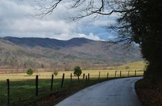 Chasing Wild Bears at Cades Cove in the Smokies