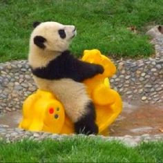 Pandas are the cutest.