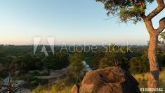 Stock Video of A linear timelapse at sunrise/daybreak/dawn with a granite rock boulder and Marula tree in a lush green landscape overlooking a riverbed. at Adobe Stock Green Landscape, Landscape Design, Home Landscaping, Lush Green, Golden Gate Bridge, Bouldering, Geology, Stock Video, Landscape Designs