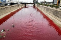 "Beirut River turns into river of blood. "" And the third angel poured out his vial upon the rivers and fountains of waters; and they became blood."" (Rev 16:4) -- 16 Feb 2012."