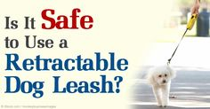 Retractable leashes allow dogs more freedom to sniff and poke around on walks, but there are many downsides to this type of leash. http://healthypets.mercola.com/sites/healthypets/archive/2014/06/11/retractable-dog-leash.aspx
