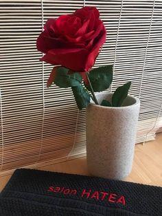 www.tantrapardubice.cz ✨ Plants, Plant, Planets
